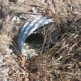 Stormwater pipe with debris